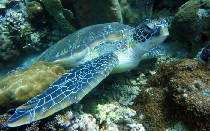 Tortuga en Indonesia. Fuente: Pixabay.com