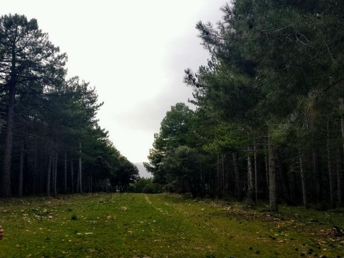 paisaje-ruta-frentedegua