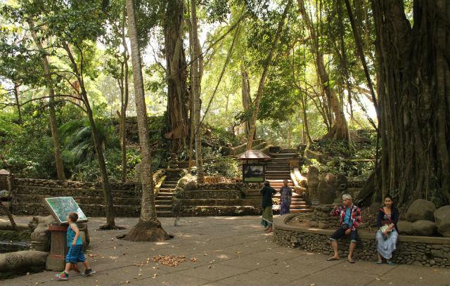 monkeyforest2