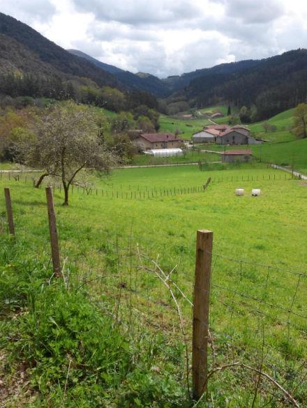 BosqueOma