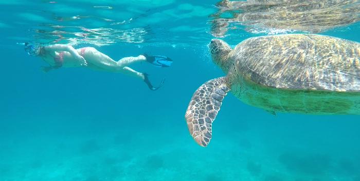 nadandoConTortuga-balicasag