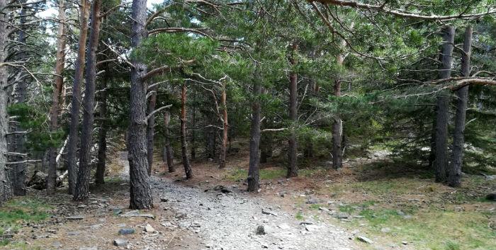 bosque-moncayo