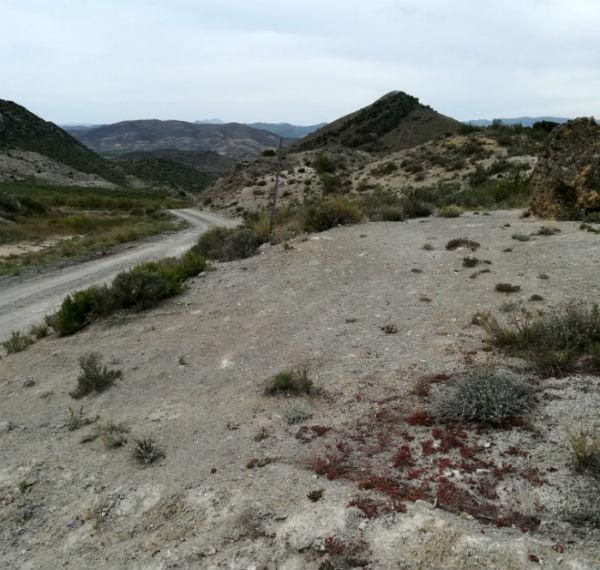 lasroscas.camino