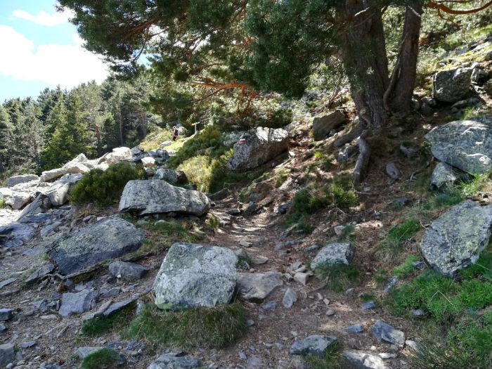 ruta-moncayo-bosque