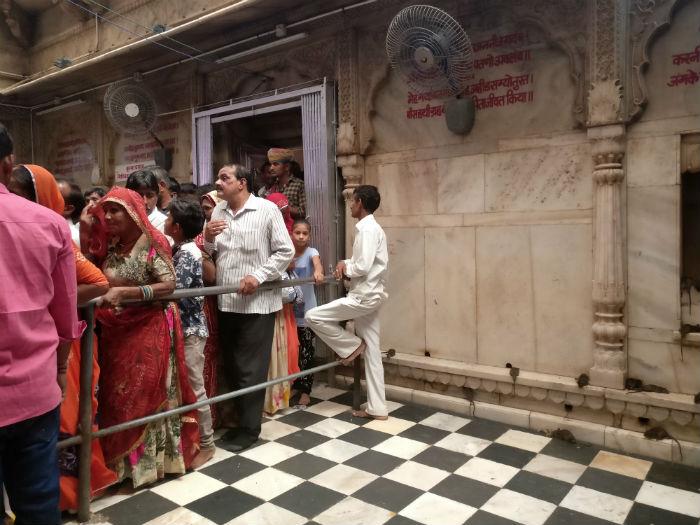 templo-ratas-india