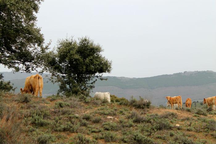 ruta-frenteagua-paisaje