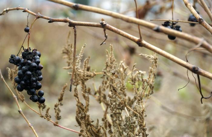vino-paisaje