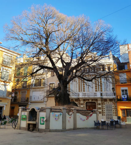 olmo-navajas-plaza