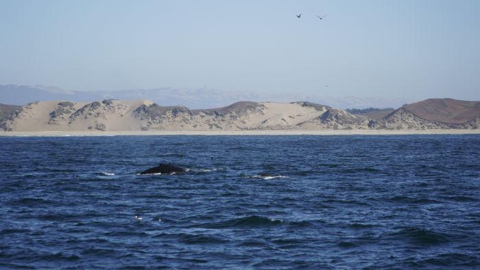 ballena-monterrey