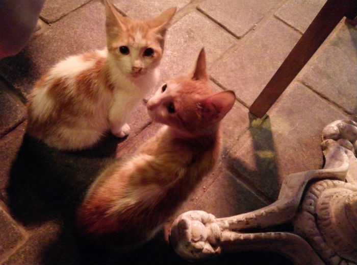 gatos-estambul2