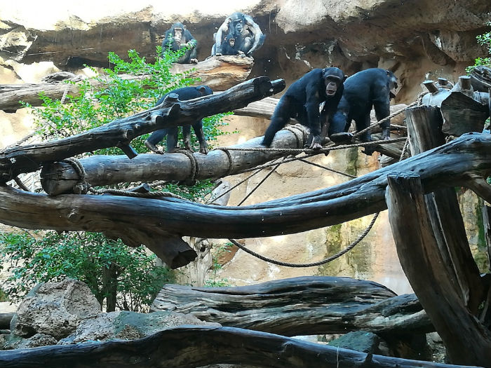 loro-park-monos