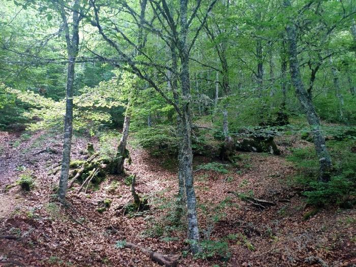 bosque-ruta-gilbo